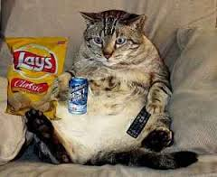 Sedentary - Fat Cat on a Couch